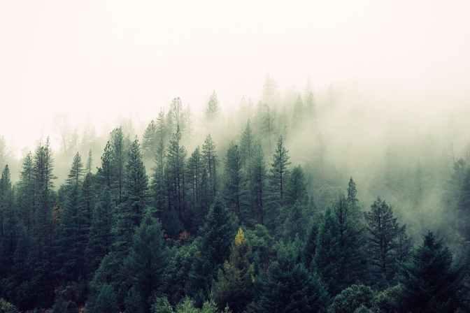 nature-forest-trees-fog.jpeg